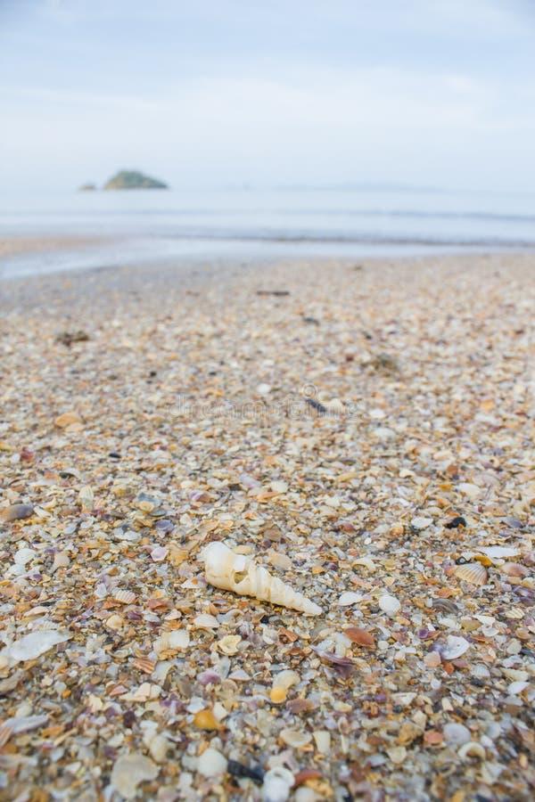 Seashell на пляже стоковая фотография