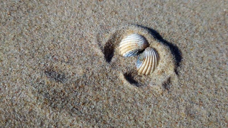 Seashell на солнечном seashore стоковое фото rf
