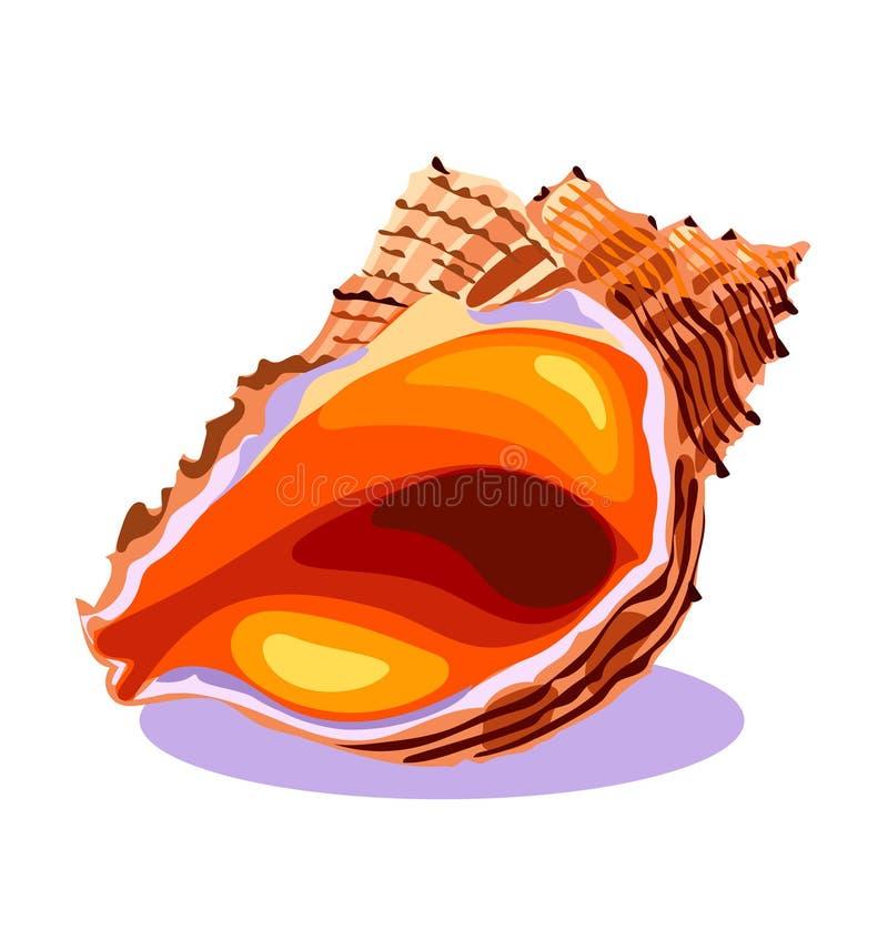 Seashell океана в конце-вверх, раковине моря, изолированном объекте, концепции лета, символе, значке, иллюстрации вектора на бели иллюстрация вектора