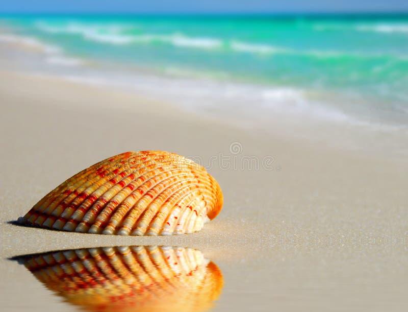 seashell пляжа уединённый стоковые изображения