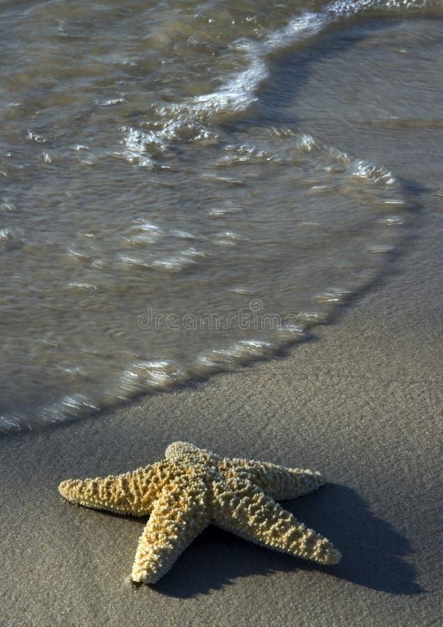 seashell пляжа стоковое фото rf