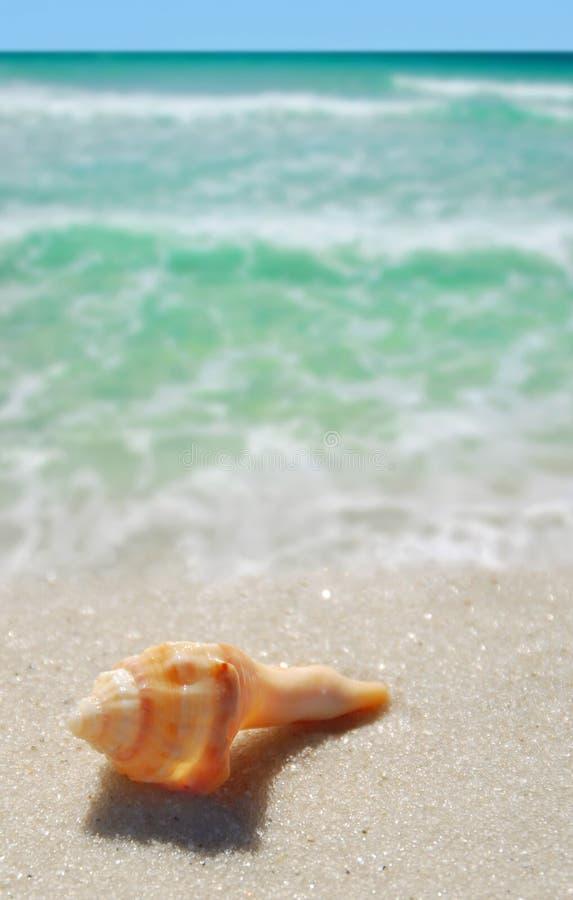 seashell пляжа стоковые изображения rf