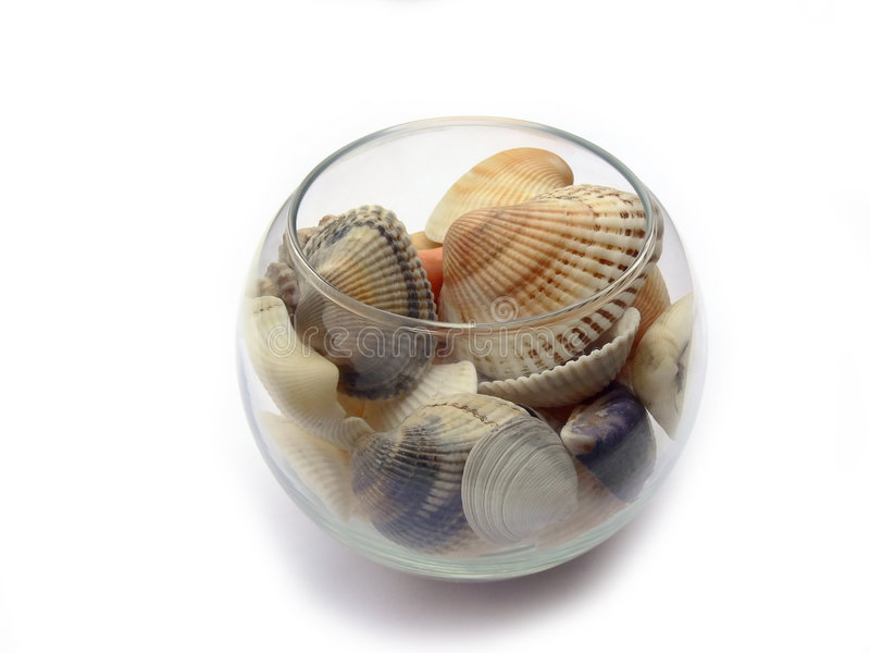 Seashell 1 stock photo