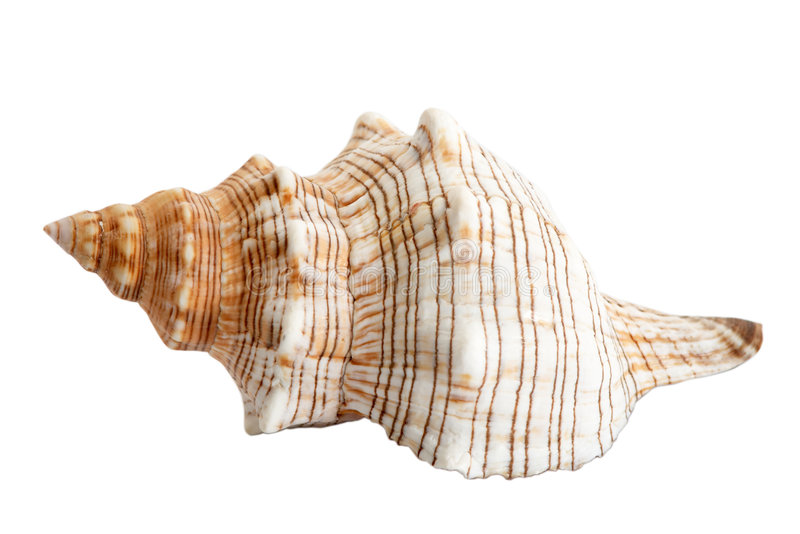 Seashell_1 foto de archivo libre de regalías