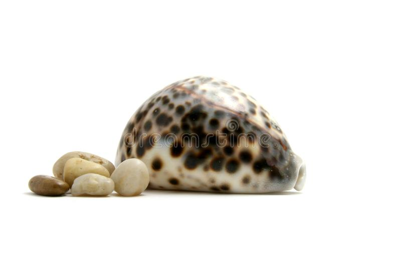 Seashell. Spotty seashell and pebbles isolated on white background royalty free stock photography