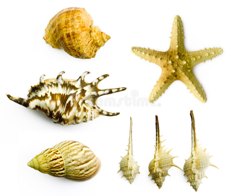 Download Seashell stock image. Image of object, isolated, relaxation - 11674747