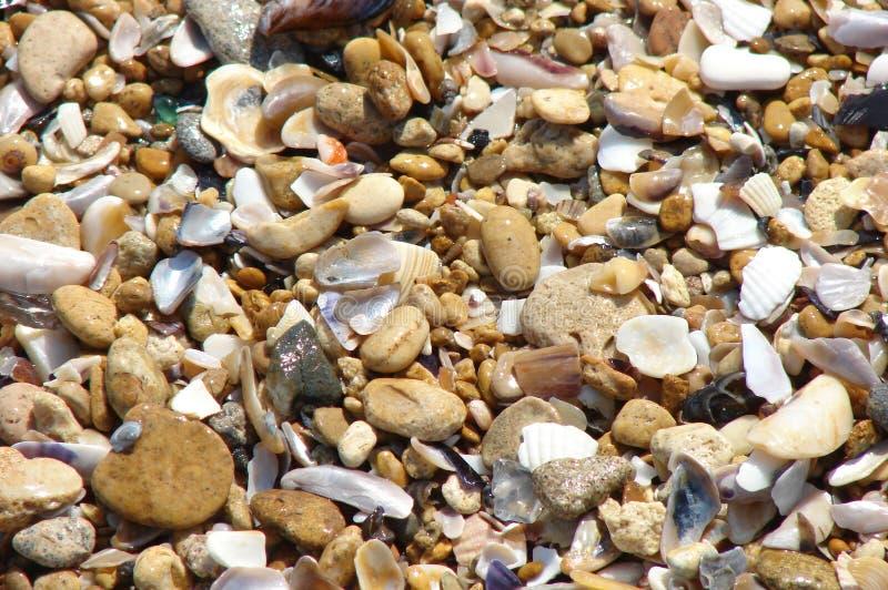 seashell стоковая фотография rf