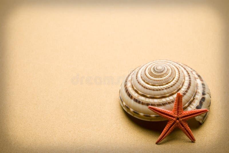 Seashell fotos de archivo libres de regalías