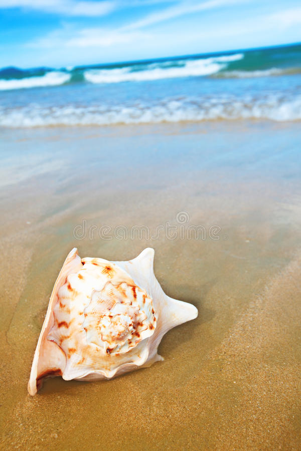 Download Seashell stock photo. Image of natural, holiday, seascape - 14854880
