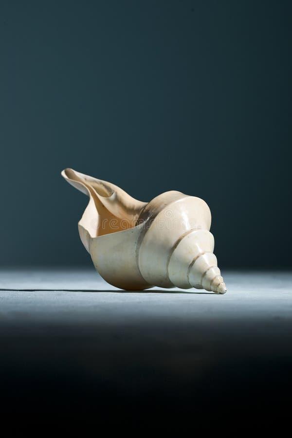 Download Seashell stock photo. Image of background, tourism, white - 15257104