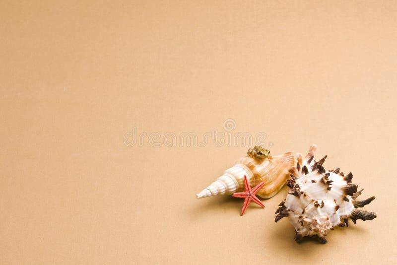 Seashell imagens de stock royalty free