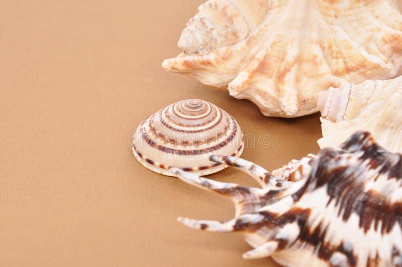 Seashell imagen de archivo libre de regalías