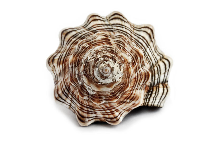 Download Seashell stock photo. Image of macro, oceans, marin, fish - 17005530