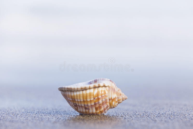Seashell images stock