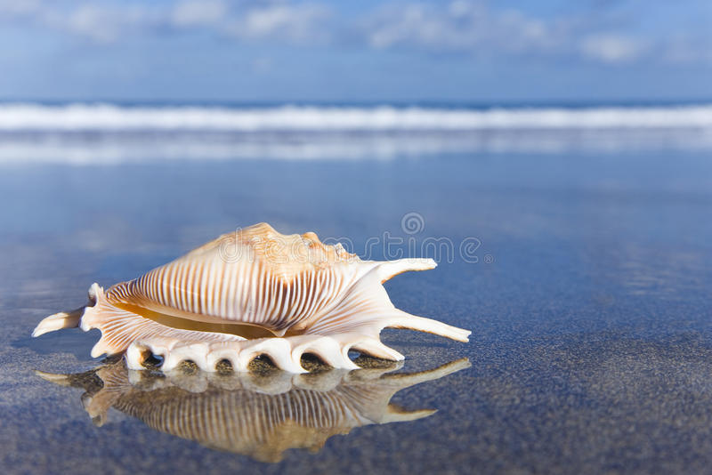 Download Seashell stock photo. Image of beach, nature, dawn, shell - 19079004
