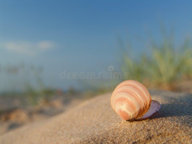 Seashell. immagine stock