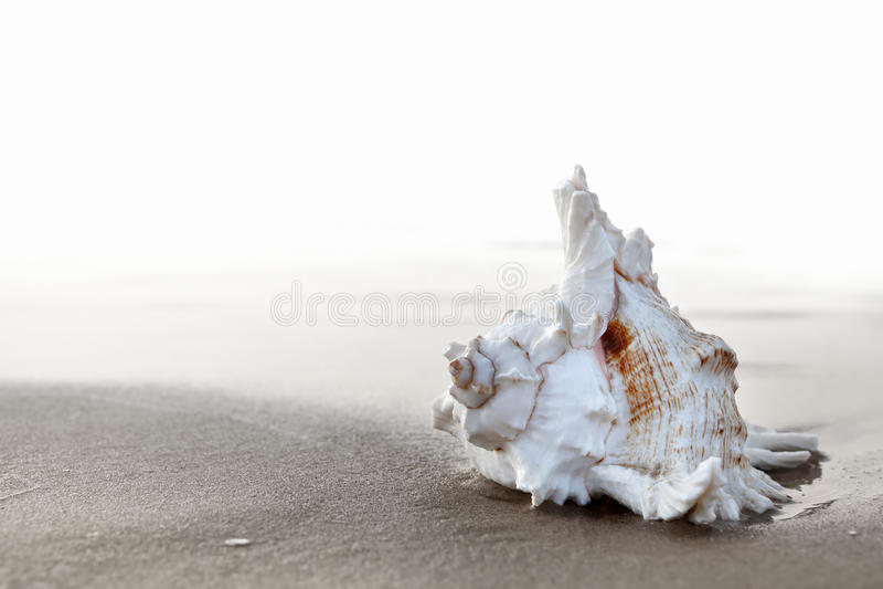 Download Seashell stock photo. Image of coast, ocean, summer, sandy - 22046858