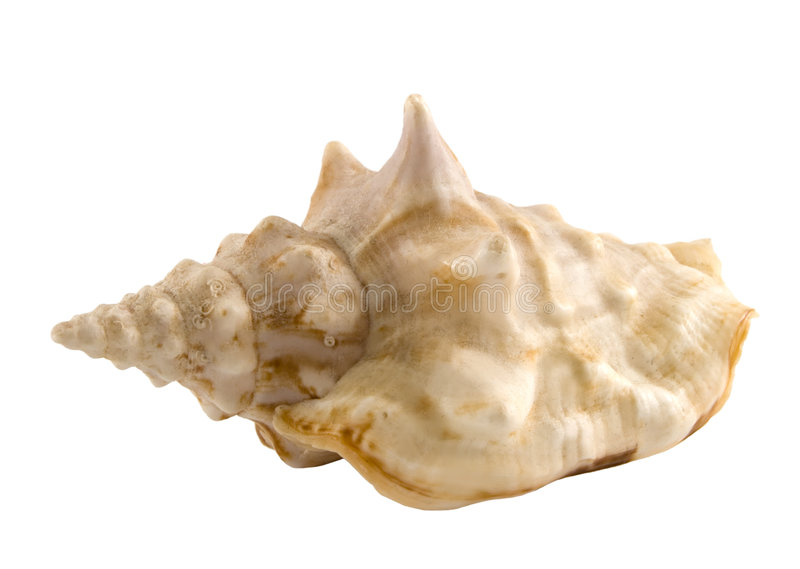 Download Seashell Royalty Free Stock Image - Image: 2308586