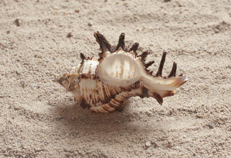 Seashell images stock