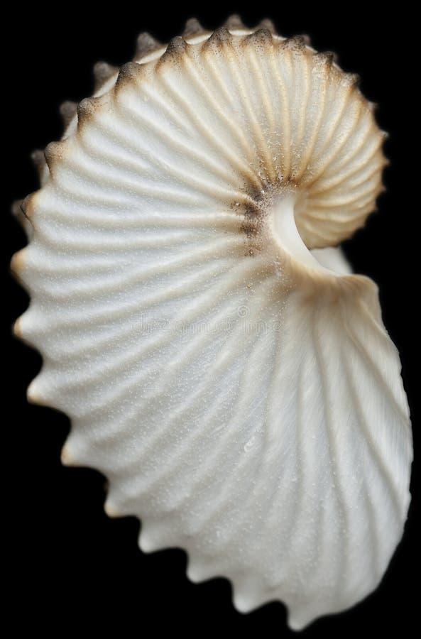 Seashell immagine stock libera da diritti