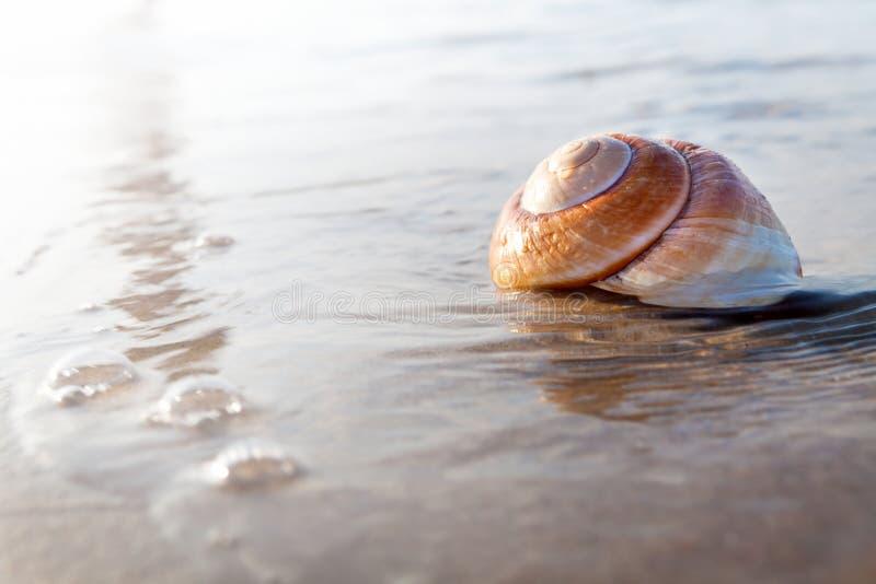 Download Seashell stock image. Image of caribbean, idyllic, space - 25921927