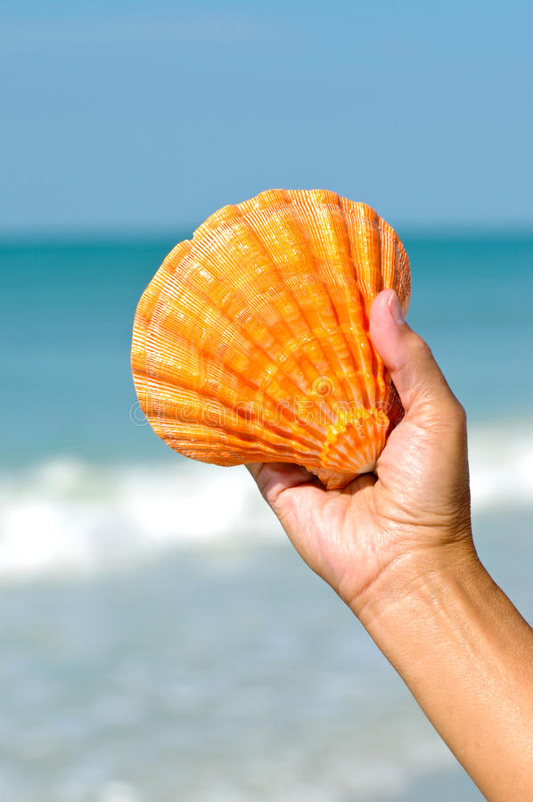 Download Seashell stock photo. Image of colorful, holding, creature - 26512190