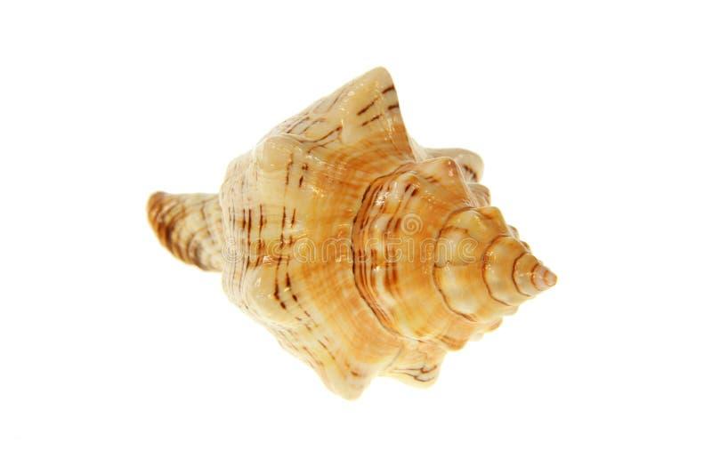 Download Seashell stock image. Image of marine, above, bath, memories - 26633715