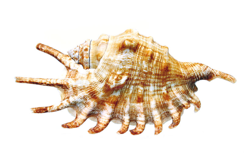 Seashell imagenes de archivo