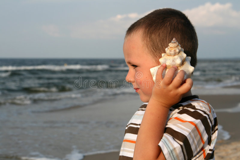 Download Seashell Stock Images - Image: 3200944