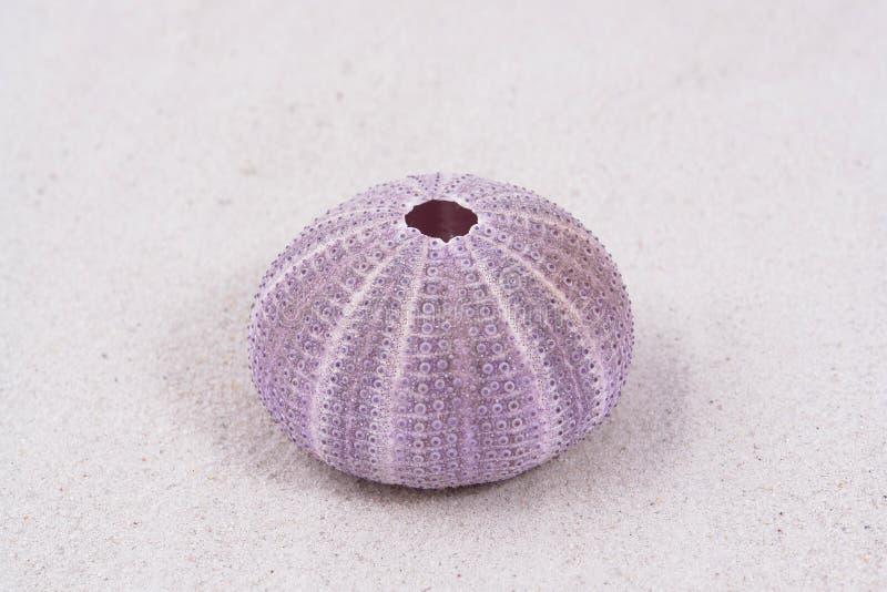 Seashell foto de archivo libre de regalías