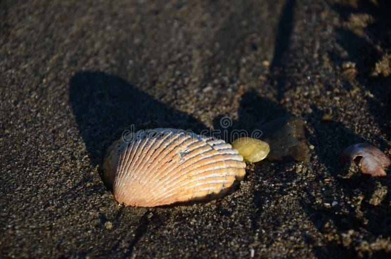 seashell stockbild