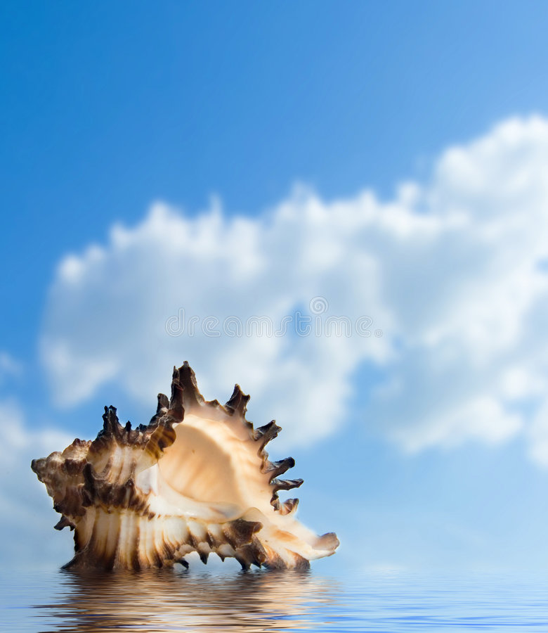 Download Seashell stock photo. Image of oyster, fish, prepared - 5859684