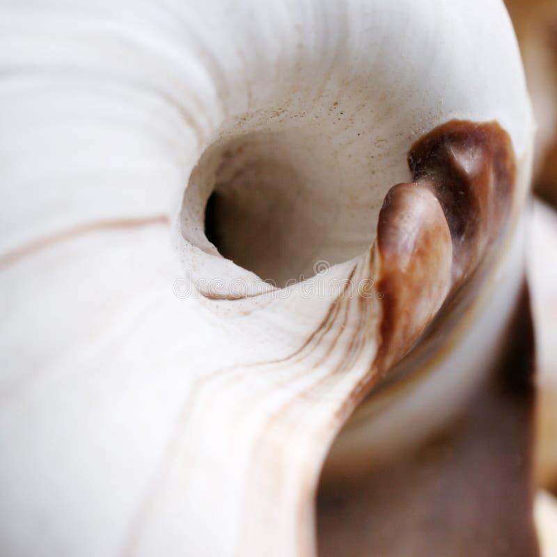 Seashell fotografía de archivo