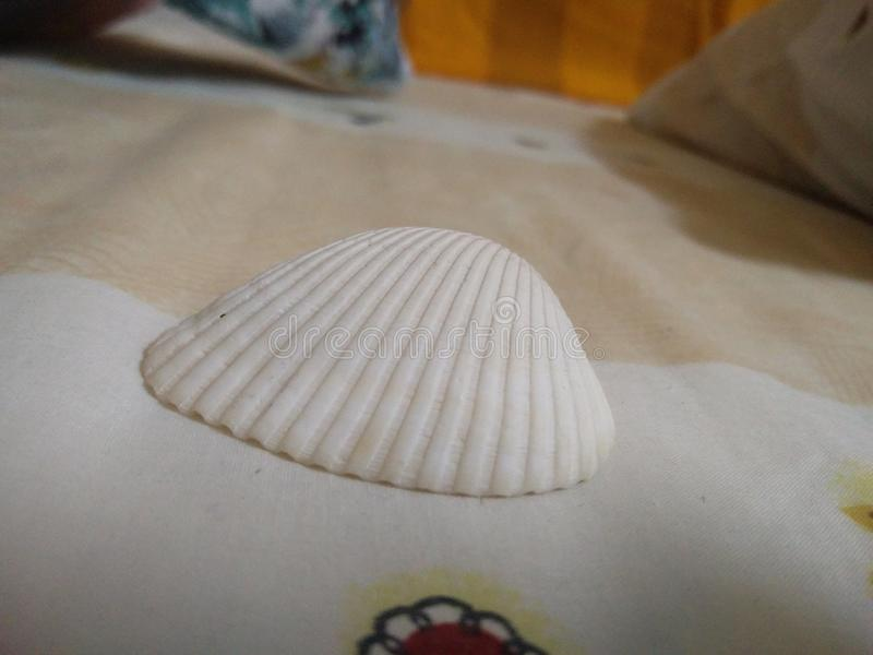 seashell stockfoto