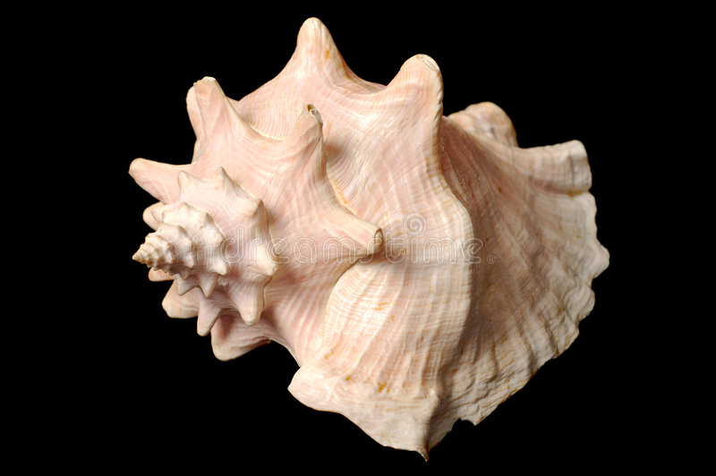 Seashell photo stock