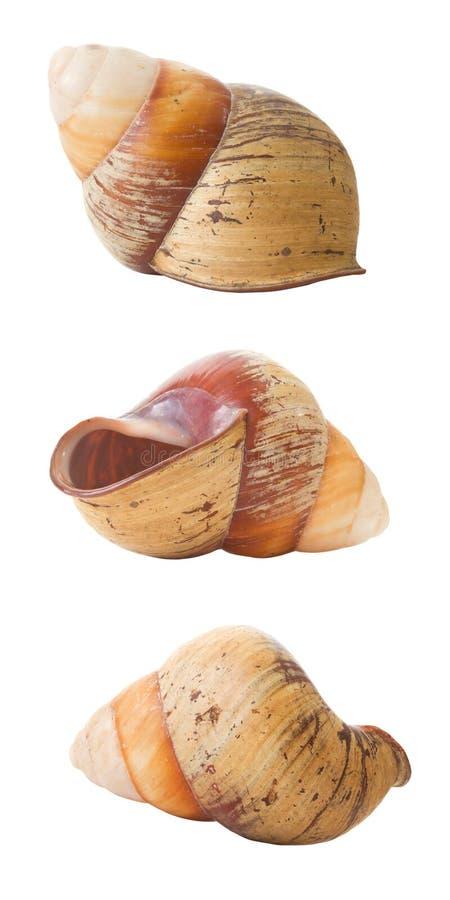 Seashell aislado, 3 opiniónes fotografía de archivo