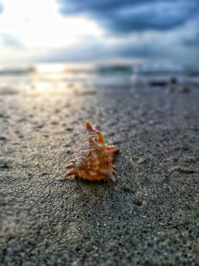 Seashell arancione fotografia stock