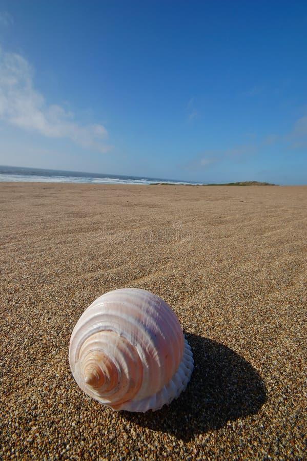 Seashell auf dem Strand lizenzfreies stockfoto