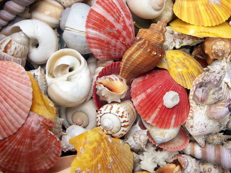 Seashell background stock photo