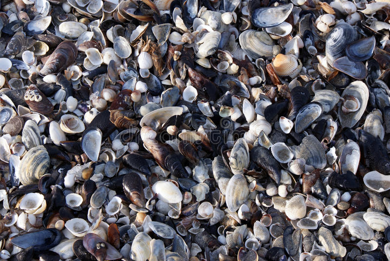 Seashell background royalty free stock photography