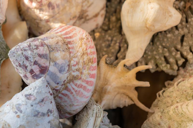 Seashell background, lots of different seashells piled. Sea shell background, lots of different seashells piled together, close up stock image