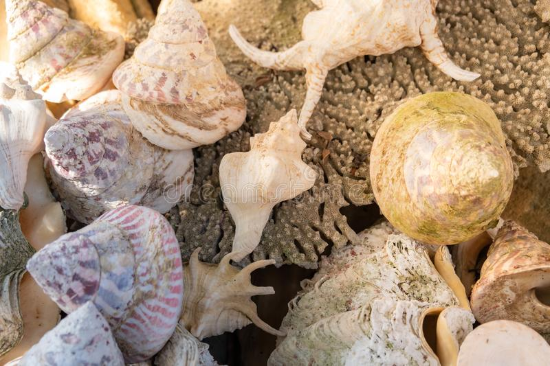 Seashell background, lots of different seashells piled. Sea shell background, lots of different seashells piled together, close up stock photography