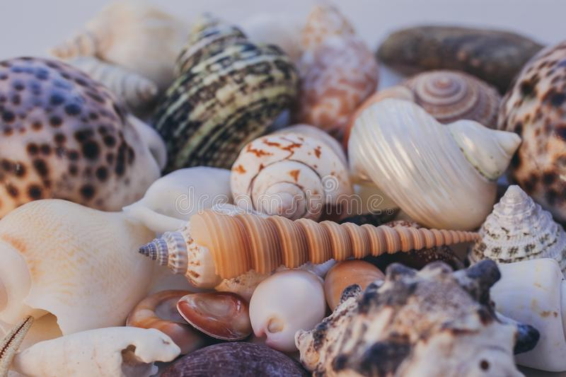 Seashell background. Lots of different seashells piled together. Seashells collection. Closeup view of many different seashells. stock image