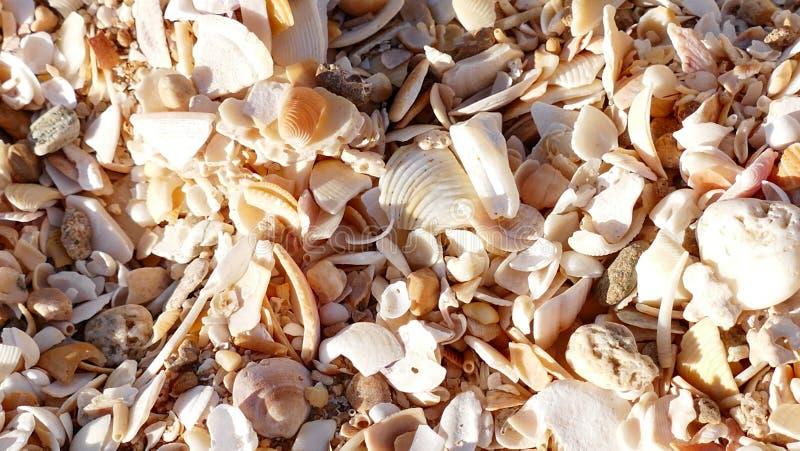 Seashell background stock photography