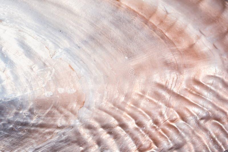 Seashell background texture stock photos