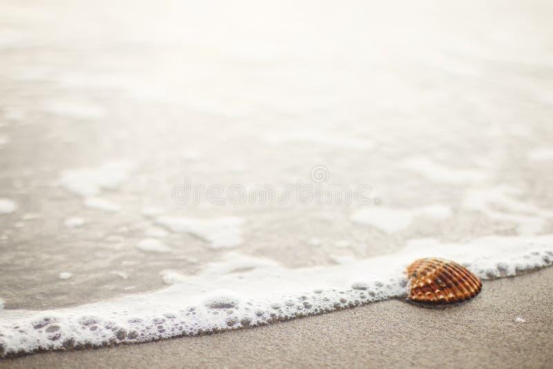 Seashell On Beach Free Public Domain Cc0 Image