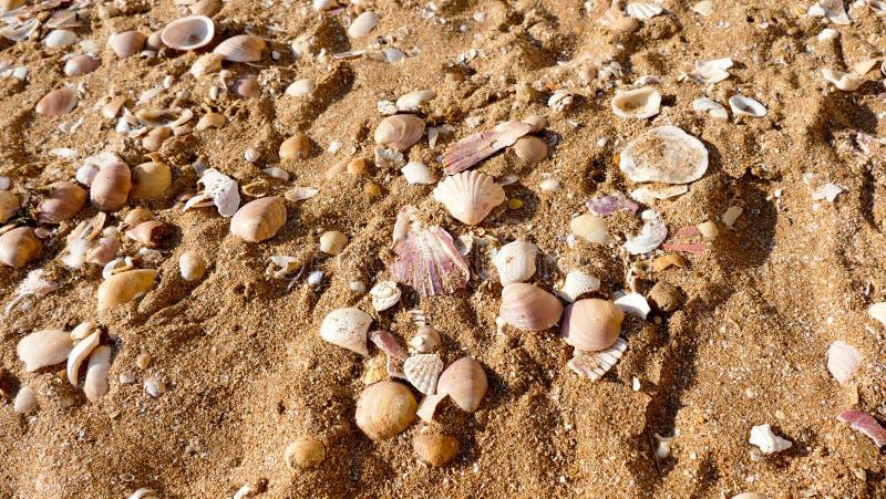 Seashell beach background stock photo