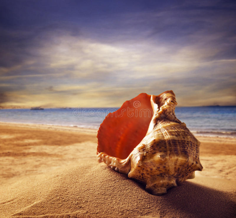 Seashell on the beach. Seashell on the sandy beach. Summer concept stock photos