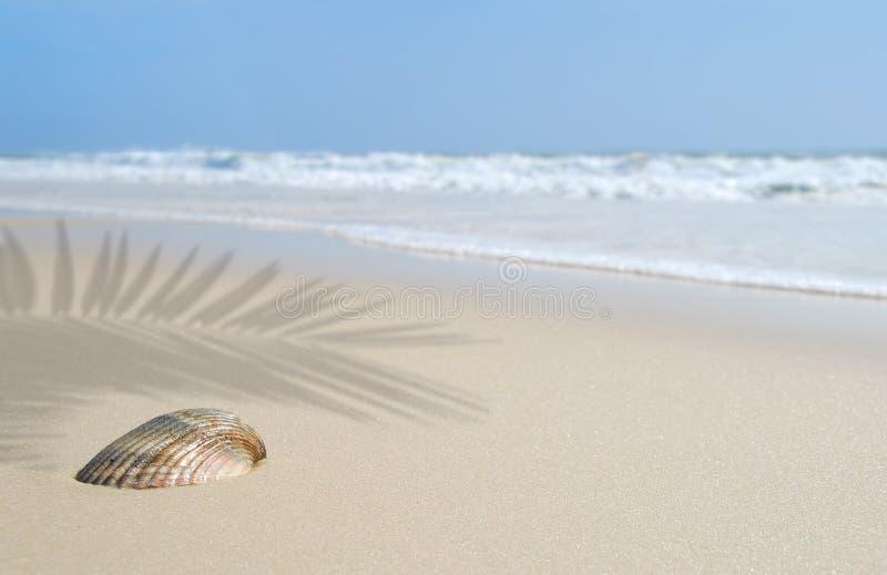 Seashell on Beach Under Palm