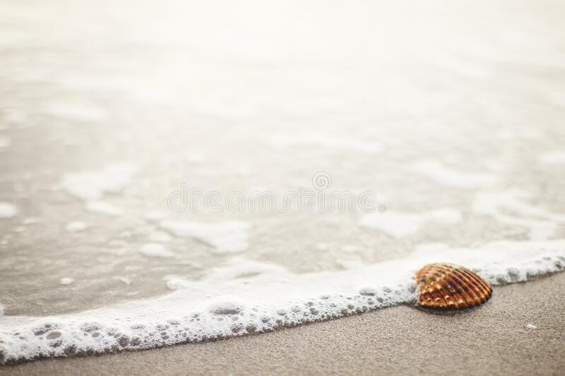Seashell On Beach Free Public Domain Cc0 Image